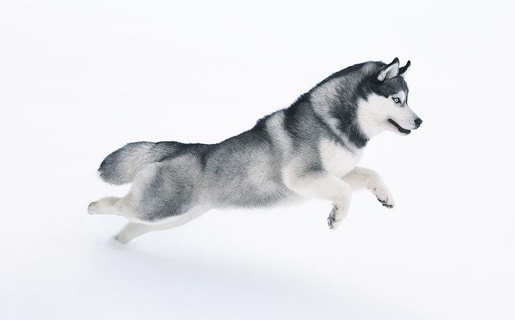 Какая ты собака ...по знаку Зодиака
