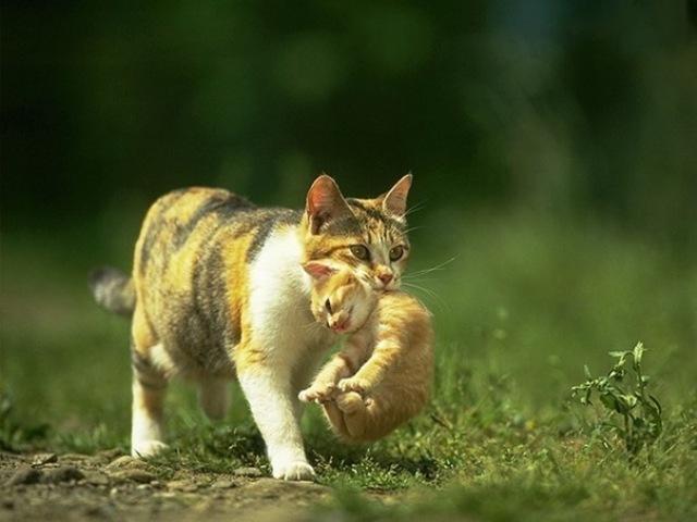 Мама-кошка у Детдома