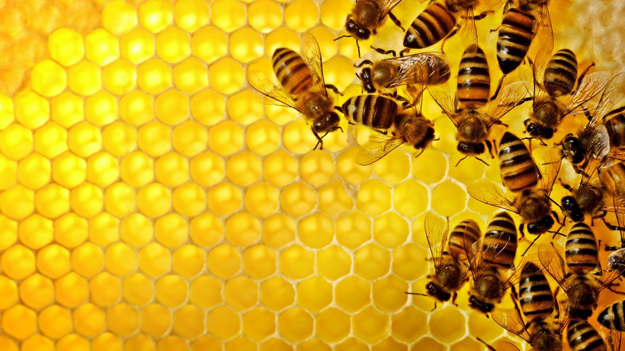 Combs_and_Bees
