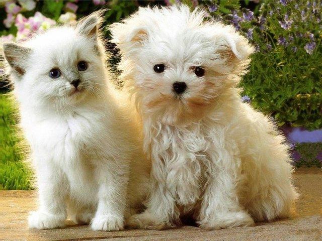 Калифорния запретила торговать щенками и котятами от заводчиков