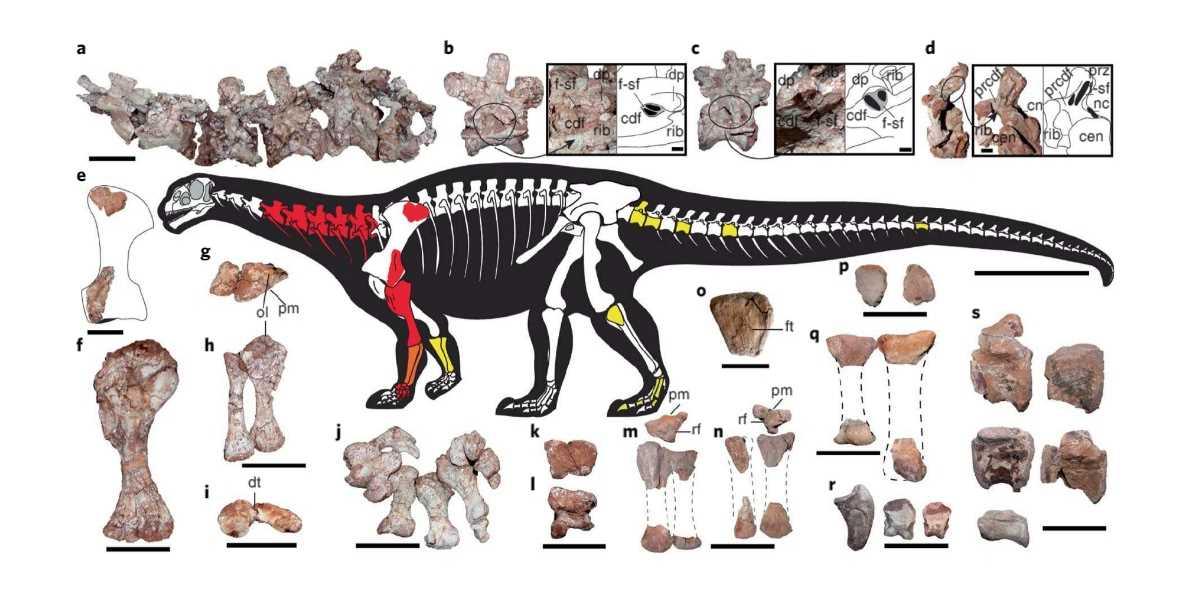 Гигантский динозавр, найденный в Аргентине, ошеломил учёных