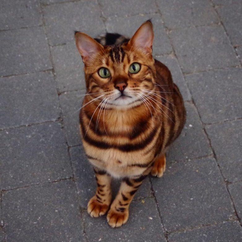 Кот, который стоит больше, чем твой iPhone