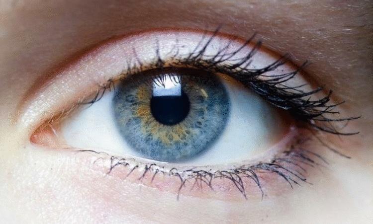 Зрение. Как сохранить и улучшить