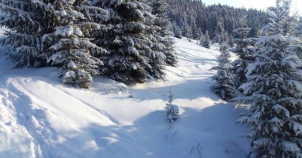 Снега белы, пушисты и глубоки...