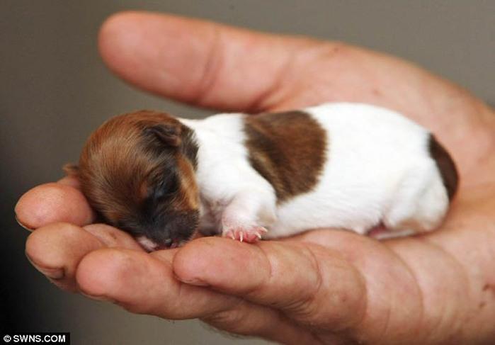 Тест для желающих завести щенка