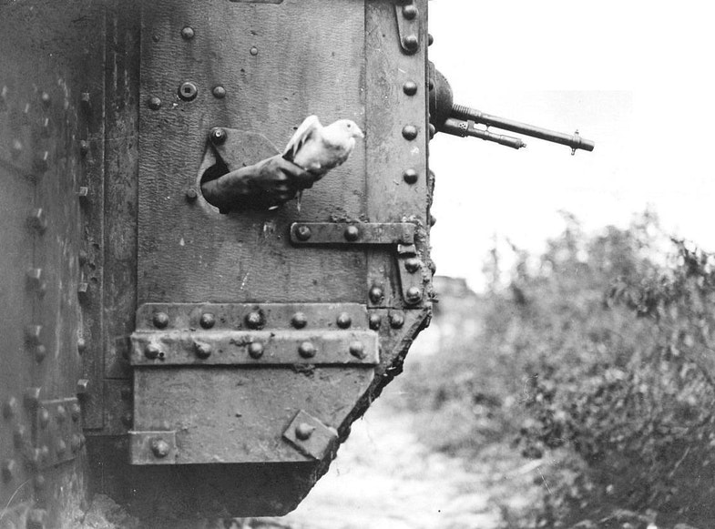 A carrier pigeon being released from a port-hole in the side of a tank near Albert, 9 August 1918. It's a Mark V tank of the 10th Battalion, Tank Corps attached to the III Corps during the Battle of Amiens