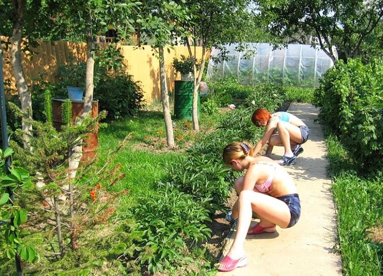 Как удалить сорняки с грядок раз и навсегда