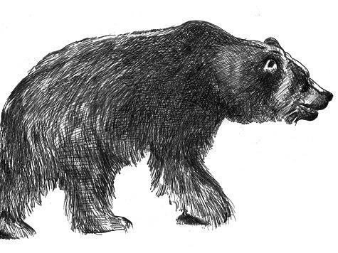 Встреча с медведем не всегда опасна
