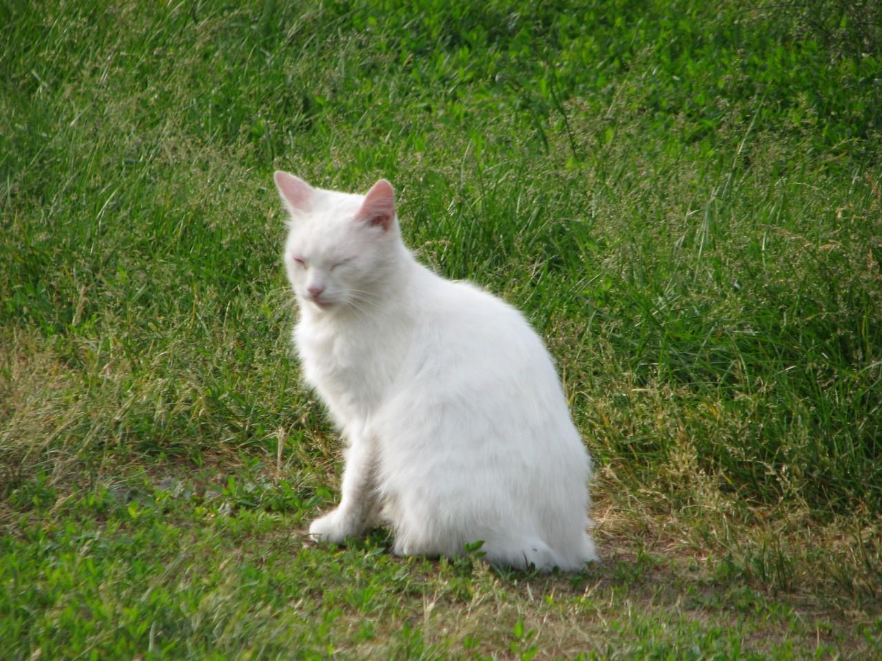 Братья наши меньшие: что слышит кошка?