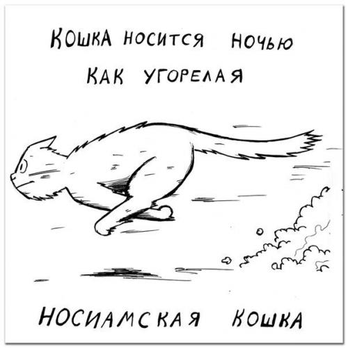 Определяем породу кошки по её характеру