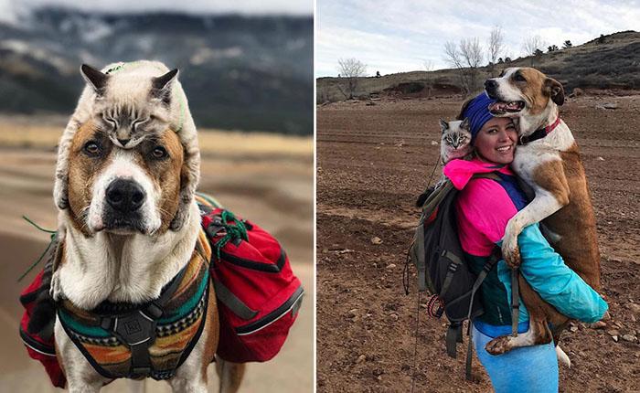 Очаровательные фотографии собаки и кота, которые ходят в походы со своими хозяевами