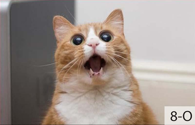 catsmiles 18 Кошачьи смайлики