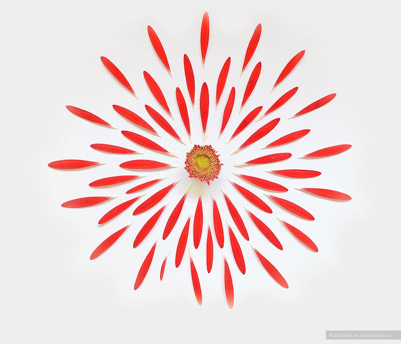 Цветы. Геометрическая красота