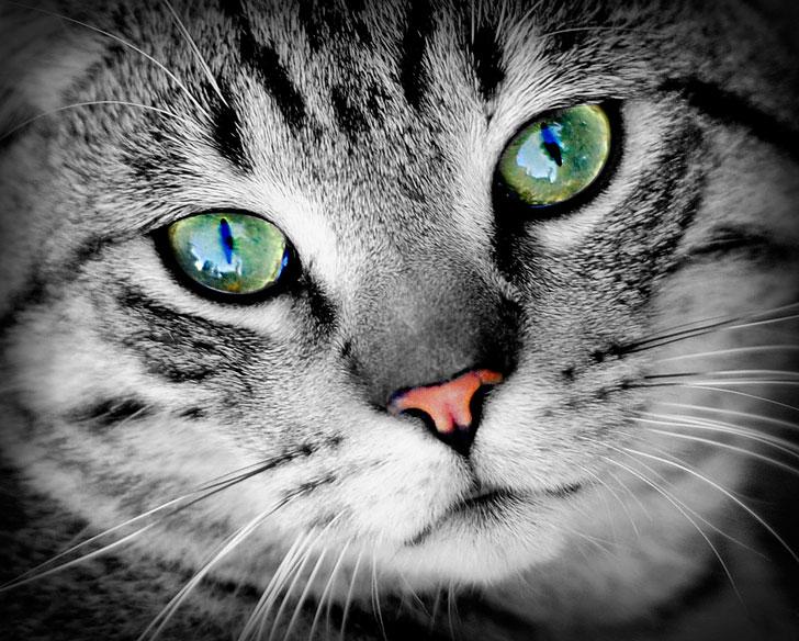 Фотографировал в приюте животных, а этот кот цеплял меня лапой