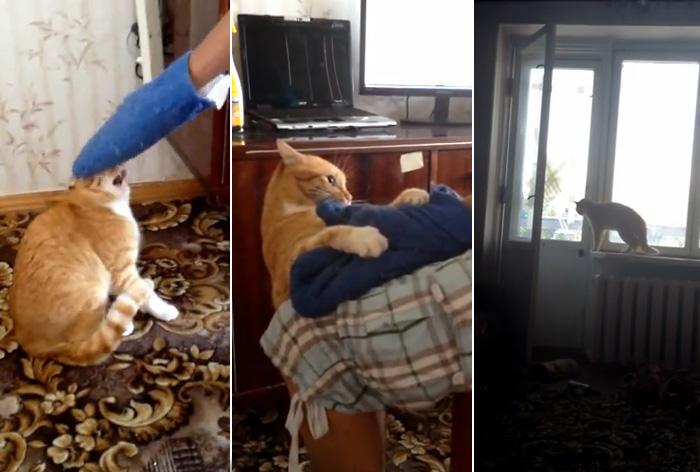 Видео-хит из России: мстительный кот обращает в паническое бегство обидевшего его человека
