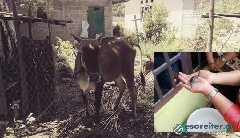Индонезийский фермер утвержд…