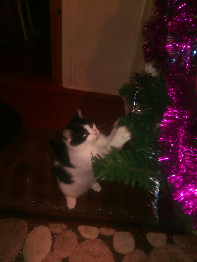 Уже год, как нам подбросили котенка...