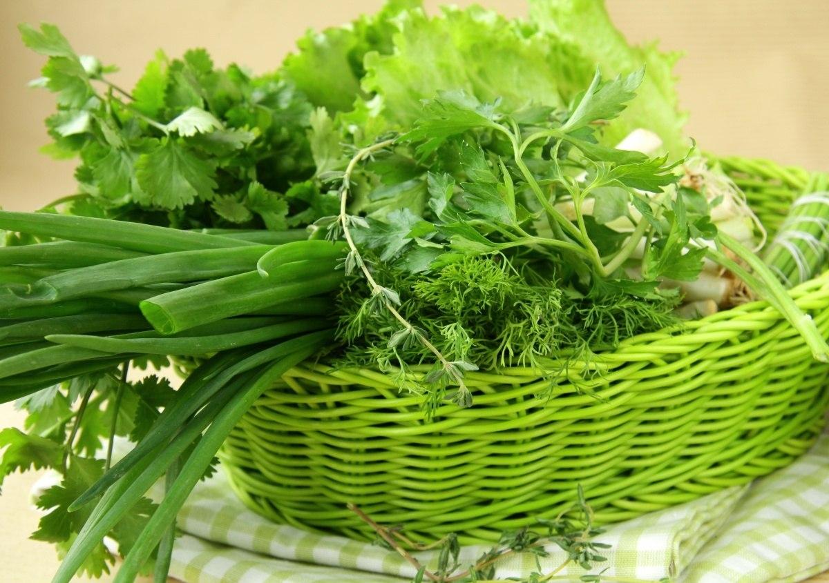 Какие сорта укропа, щавеля, кресс-салата дадут ранний урожай