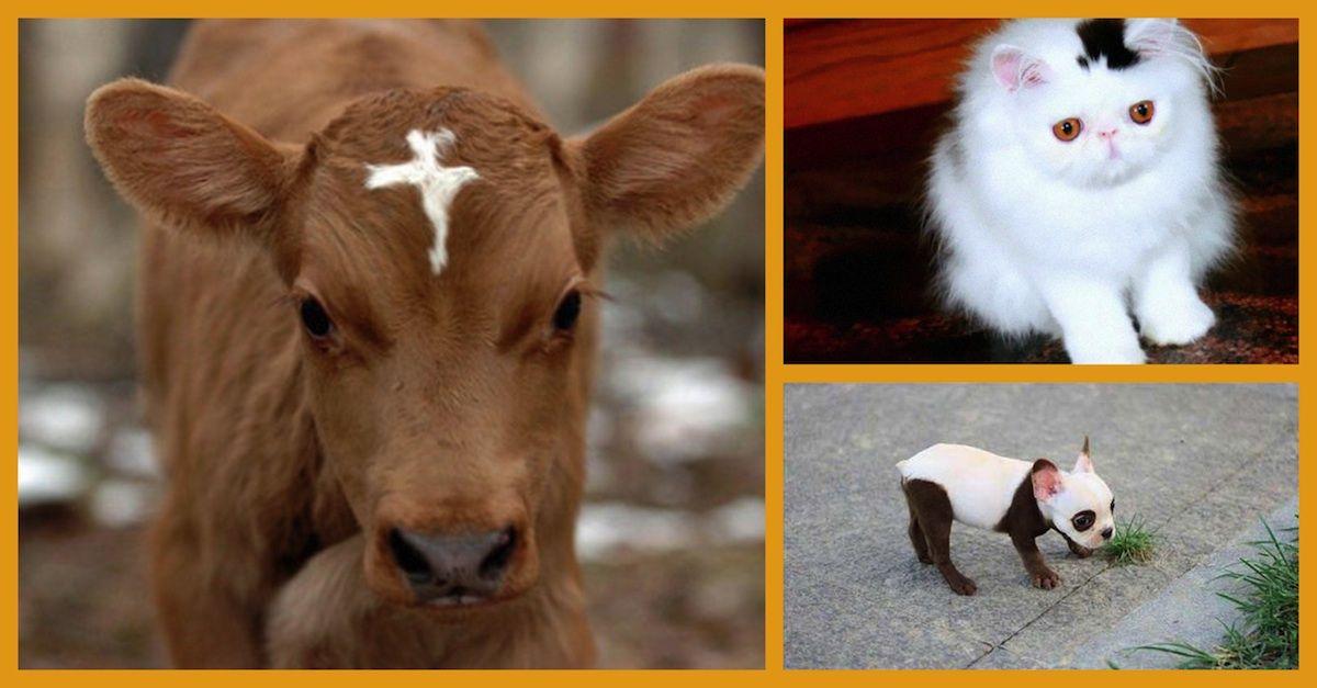30 животных, которых природа разрисовала с юморком