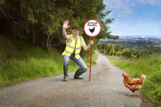 Календарь на 2019 год от ирландских фермеров для одиноких независимых дам
