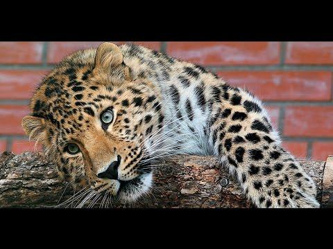 Большая кошка тоже нуждается в любви и ласке.