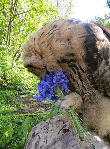 Все девушки любят цветы цветы, внимание, любят