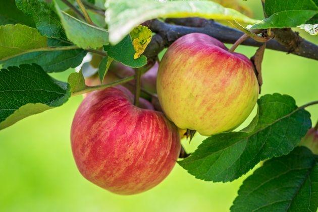 Андрей Туманов: почему на яб…