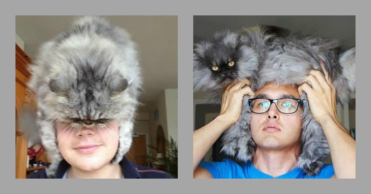 Зима близко! Не мёрзнем — надеваем живую шапочку из… кота! :)