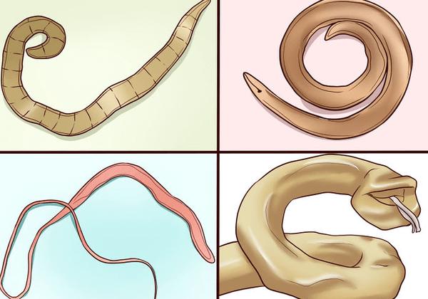 Как избавиться от паразитов: пошаговая инструкция