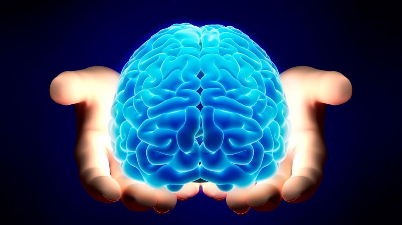 В мозге нашли четвертое измерение. Чего жду, то и вижу — все проблемы от головы