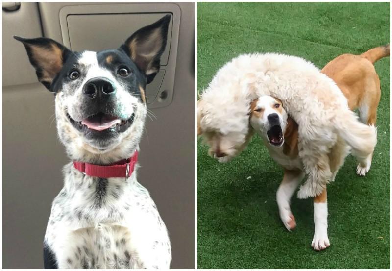 20 чудаковатых собак, которые обязательно поднимут вам настроение