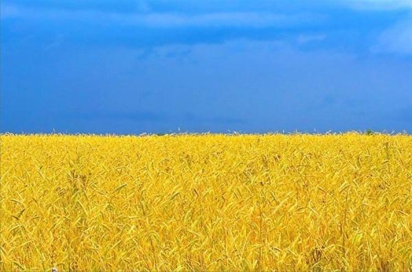 Квоты Украины назерновой экспорт вЕвропу кончились запять дней