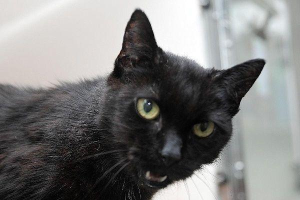 Хозяйка оставила Руби и рванула в Австралию. В отместку ей чёрная кошка научилась… разговаривать!
