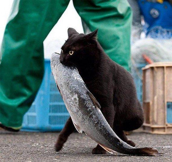 Коты, которых застали врасплох. И вовсе они не воруют, они охотятся!