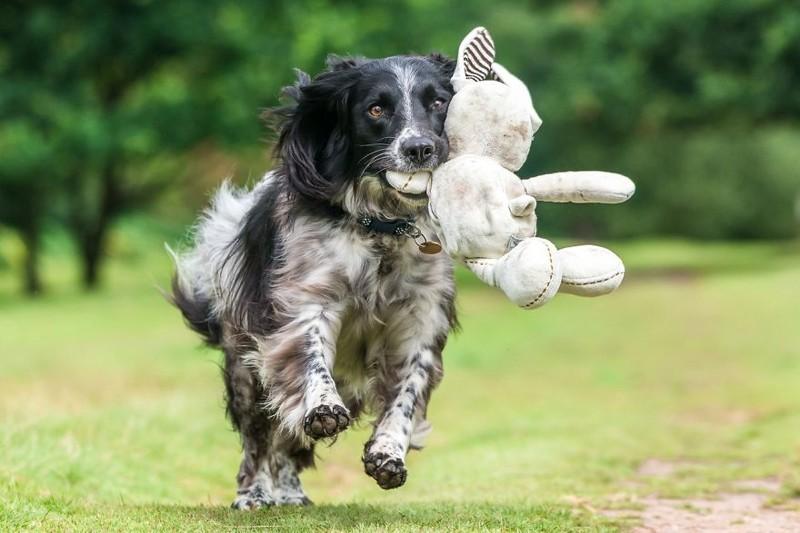 """3 место в категории """"Игры собак"""" - Уилл Холдкрофт, Великобритания Кеннел клаб, животные, конкурс, лондон, портрет, собаки, фото, фотография года"""