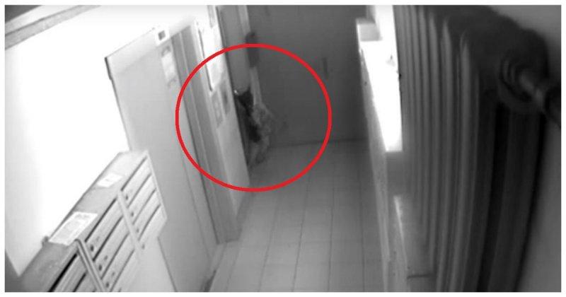 Молодые ребята спасли собаку которую душило поводком зажатым дверми лифта