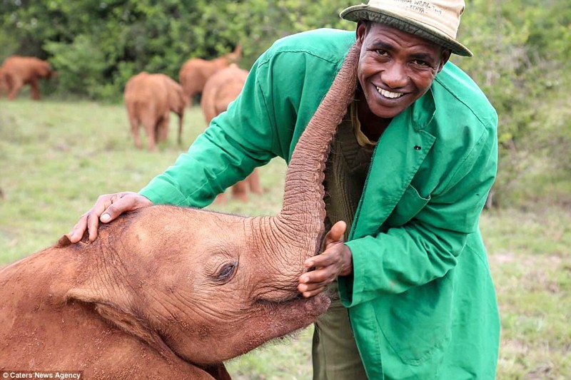 Мбегу стала жертвой мести обезумевших жителей деревни Киманджо детеныш, животные, история, кения, люди, мир, слониха, спасение