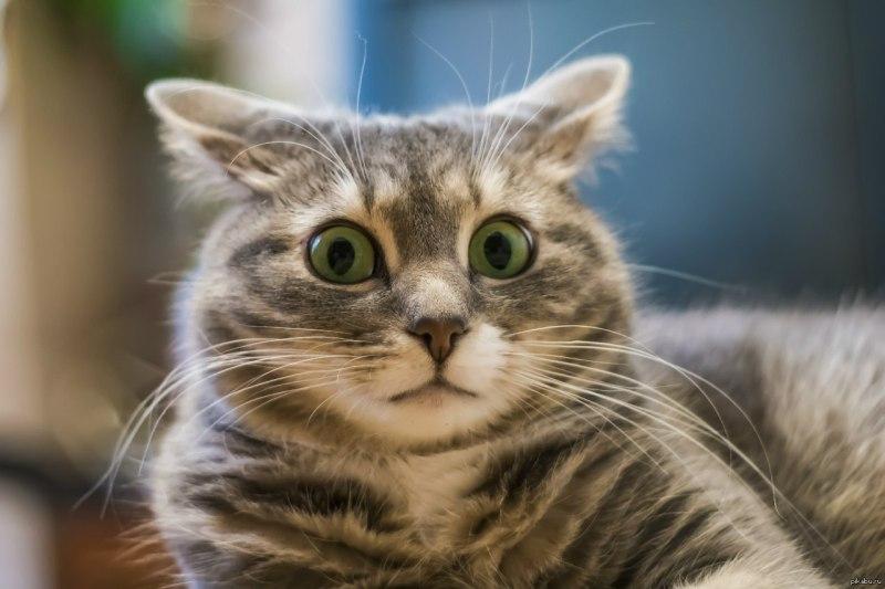 Коты, которые ведут себя оче…