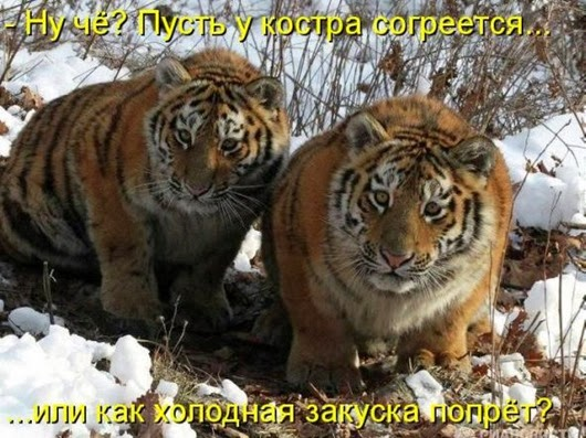 5d163436bff98ba55dea07e3f22_prev