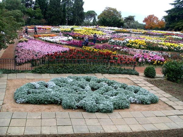 В Никитском ботаническом саду в конце ноября