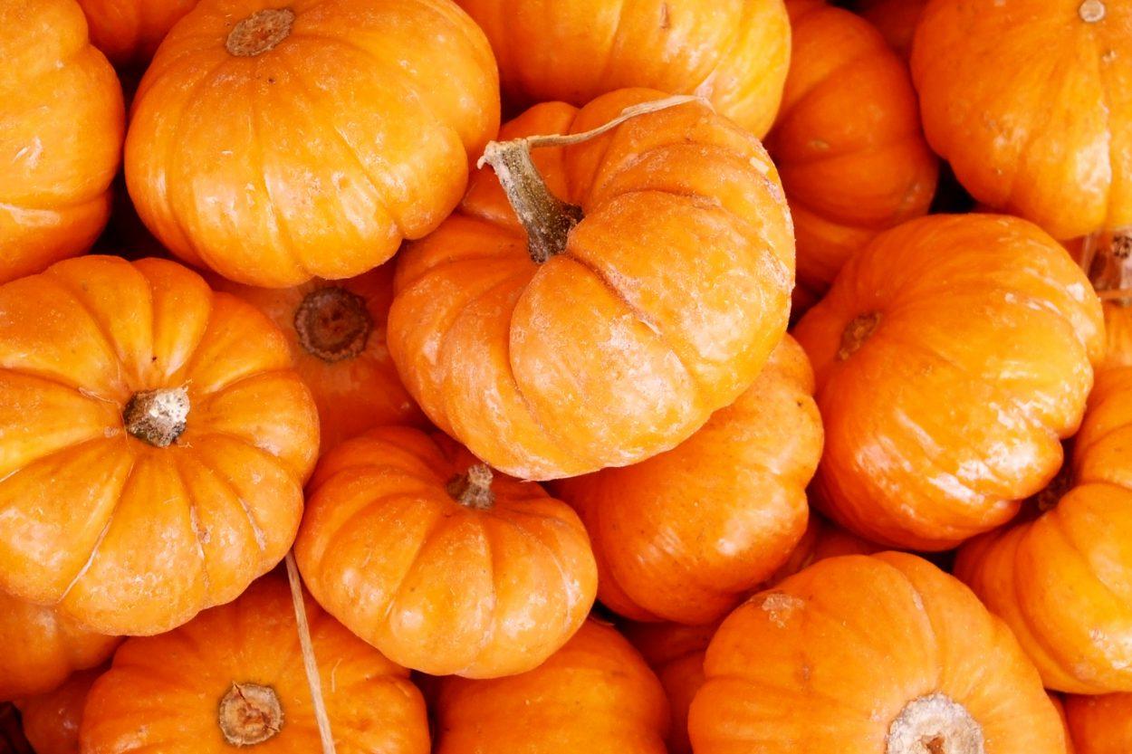 10 любопытных фактов о чудо-овоще сезона — тыкве