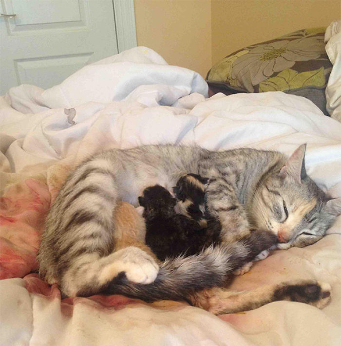 I've Been Joking That I Will Wake Up And Find My Cat Had Her Babies In Bed With Me