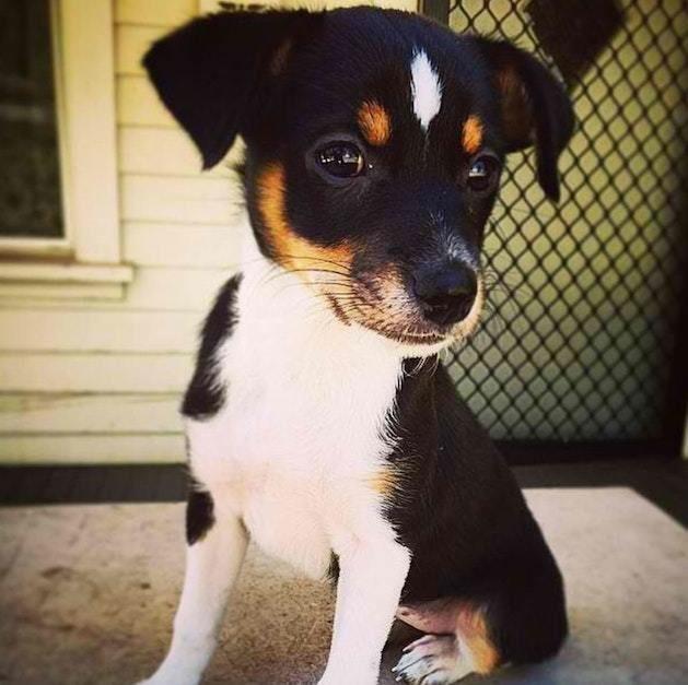 Непослушного щенка вернули в приют дважды! Но кое-кому в голову пришла гениальная идея…