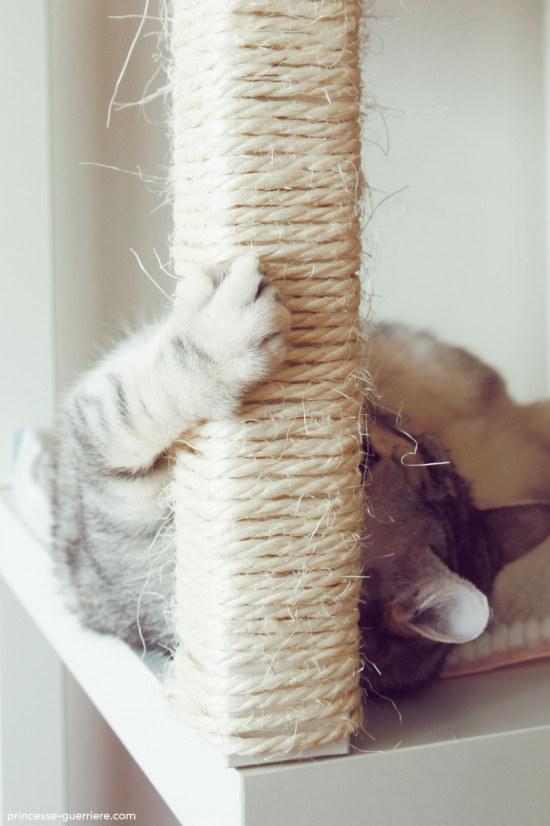 27 гениальных советов для тех, у кого есть кошка
