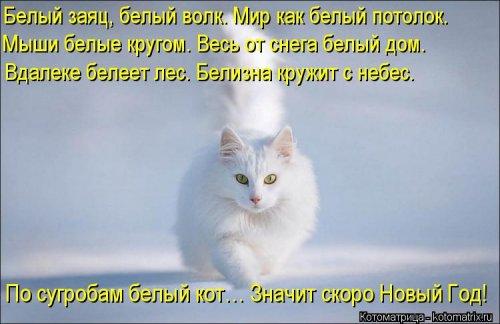 О наших милых котиков и кошечок