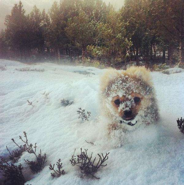 animals-first-time-seeing-snow-5__700