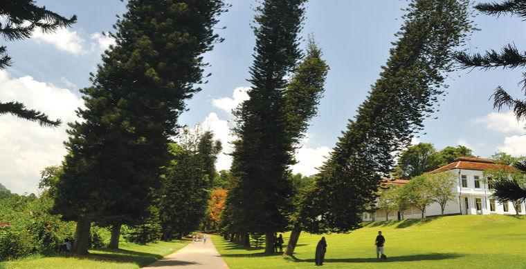 Найдены деревья, которые всегда склоняются к экватору