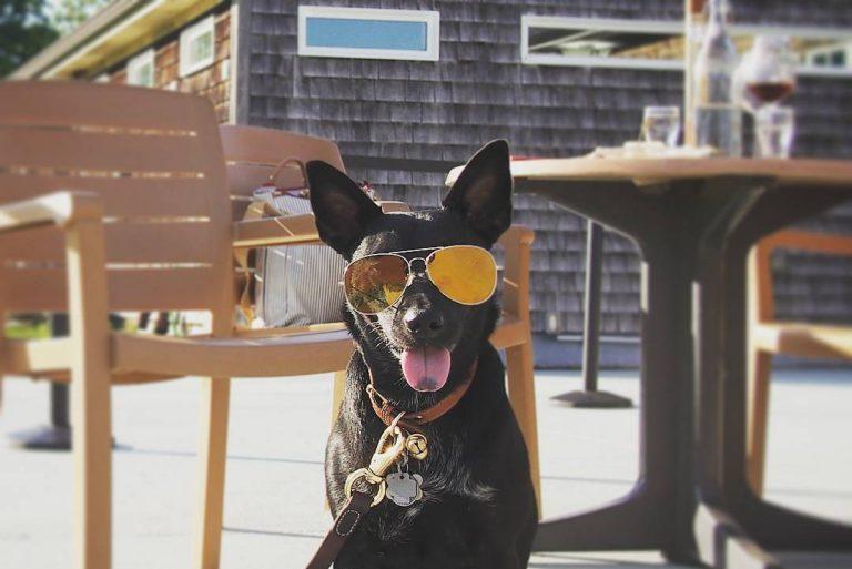 Крутейший пес — звезда Инстаграм. Прославился любовью к очкам