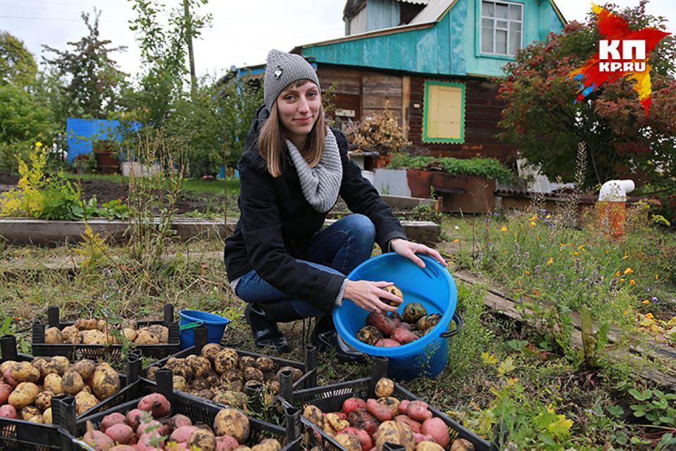 Четыре секрета, как лучше сохранить картофель и отобрать лучшие клубни на семена