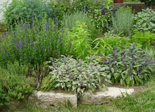 Пряные травы для мест с притенением